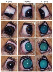 Comparison of systemic atracurium, retrobulbar lidocaine, and sub-Tenon's lidocaine injections in akinesia and mydriasis in dogs