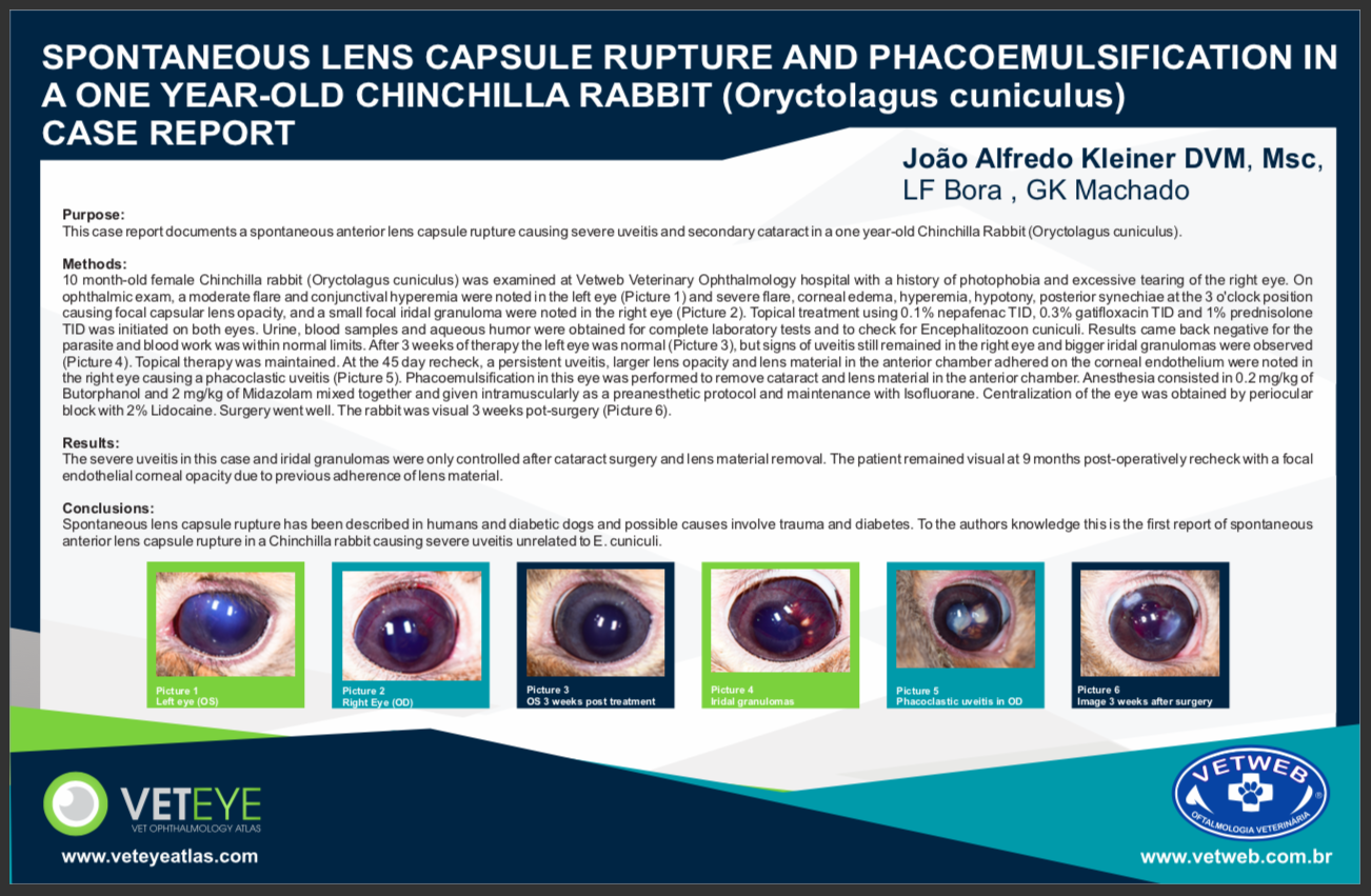 Spontaneous lens capsule rupture and phacoemulsification in a one year-old chinchilla rabbit